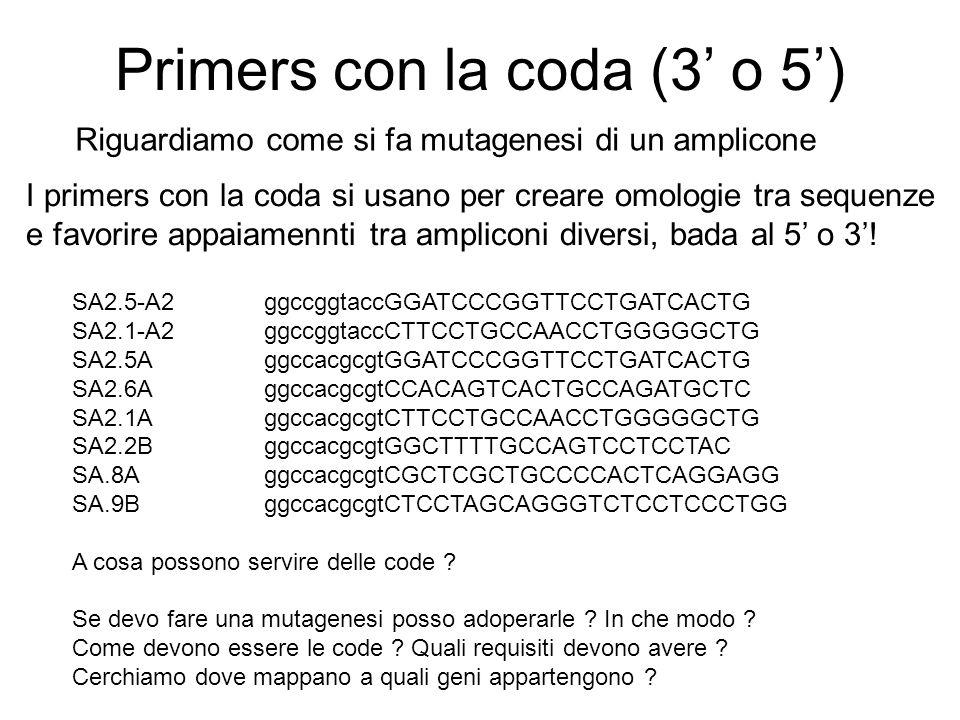 Primers con la coda (3 o 5) SA2.5-A2 ggccggtaccGGATCCCGGTTCCTGATCACTG SA2.1-A2 ggccggtaccCTTCCTGCCAACCTGGGGGCTG SA2.5A ggccacgcgtGGATCCCGGTTCCTGATCACT