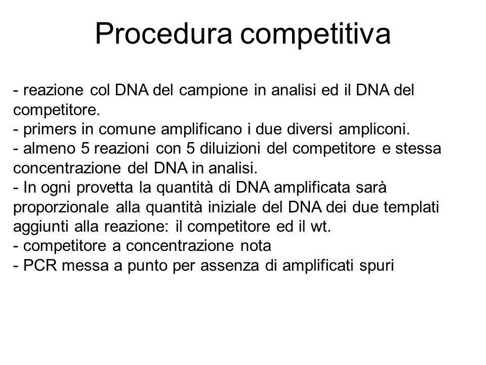 Procedura competitiva - reazione col DNA del campione in analisi ed il DNA del competitore. - primers in comune amplificano i due diversi ampliconi. -
