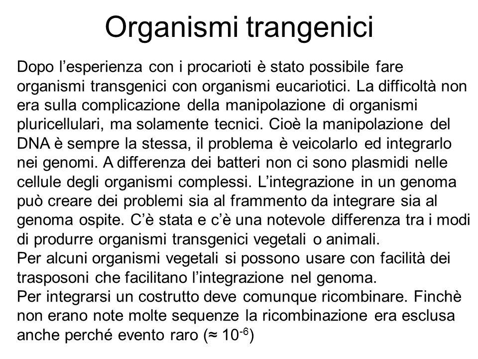 Organismi trangenici Dopo lesperienza con i procarioti è stato possibile fare organismi transgenici con organismi eucariotici. La difficoltà non era s