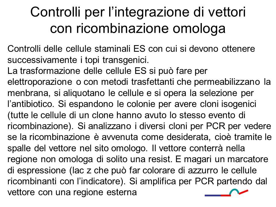 Controlli per lintegrazione di vettori con ricombinazione omologa Controlli delle cellule staminali ES con cui si devono ottenere successivamente i to