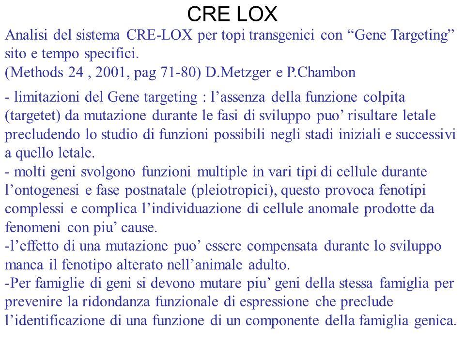 Analisi del sistema CRE-LOX per topi transgenici con Gene Targeting sito e tempo specifici. (Methods 24, 2001, pag 71-80) D.Metzger e P.Chambon - limi
