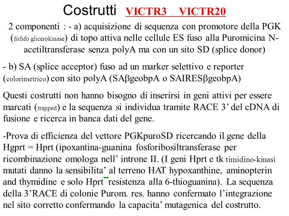 2 componenti : - a) acquisizione di sequenza con promotore della PGK ( fofsfo glicerokinase ) di topo attiva nelle cellule ES fuso alla Puromicina N-