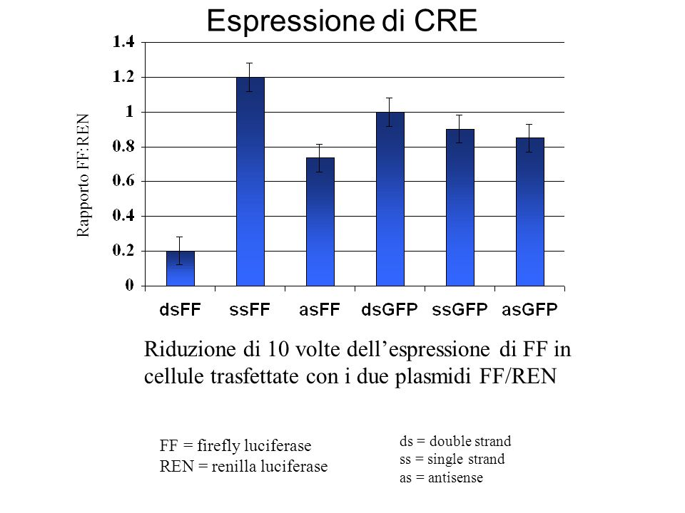 Rapporto FF:REN Riduzione di 10 volte dellespressione di FF in cellule trasfettate con i due plasmidi FF/REN FF = firefly luciferase REN = renilla luc