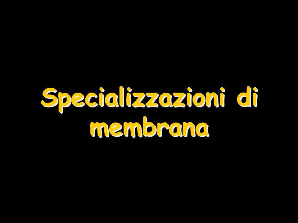 Specializzazioni di membrana