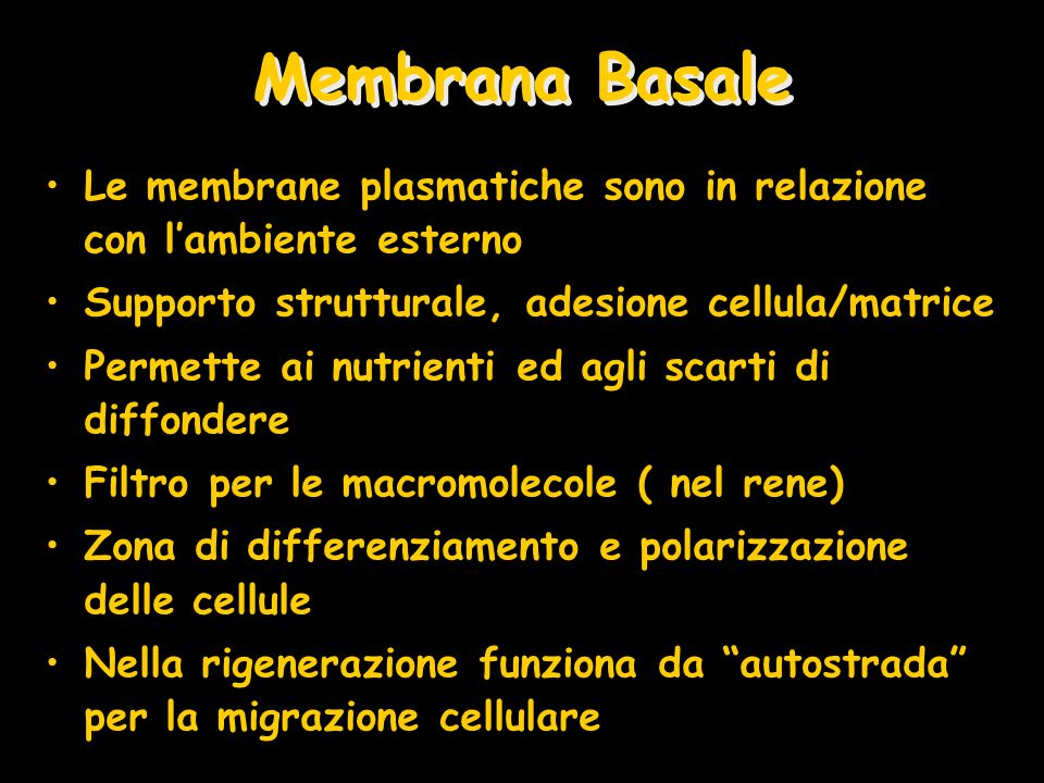 Membrana Basale Le membrane plasmatiche sono in relazione con lambiente esterno Supporto strutturale, adesione cellula/matrice Permette ai nutrienti ed agli scarti di diffondere Filtro per le macromolecole ( nel rene) Zona di differenziamento e polarizzazione delle cellule Nella rigenerazione funziona da autostrada per la migrazione cellulare