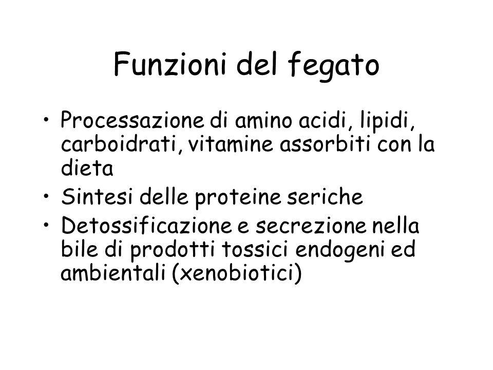 Funzioni del fegato Processazione di amino acidi, lipidi, carboidrati, vitamine assorbiti con la dieta Sintesi delle proteine seriche Detossificazione