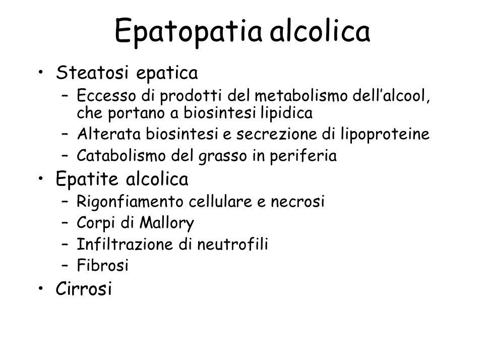 Epatopatia alcolica Steatosi epatica –Eccesso di prodotti del metabolismo dellalcool, che portano a biosintesi lipidica –Alterata biosintesi e secrezi