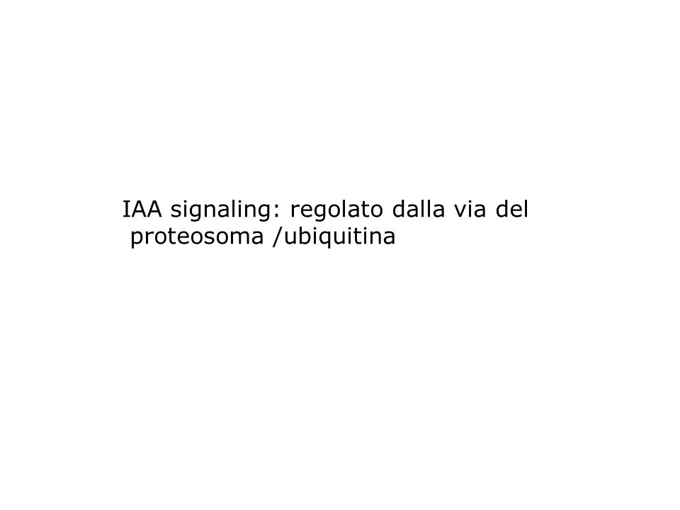 IAA signaling: regolato dalla via del proteosoma /ubiquitina