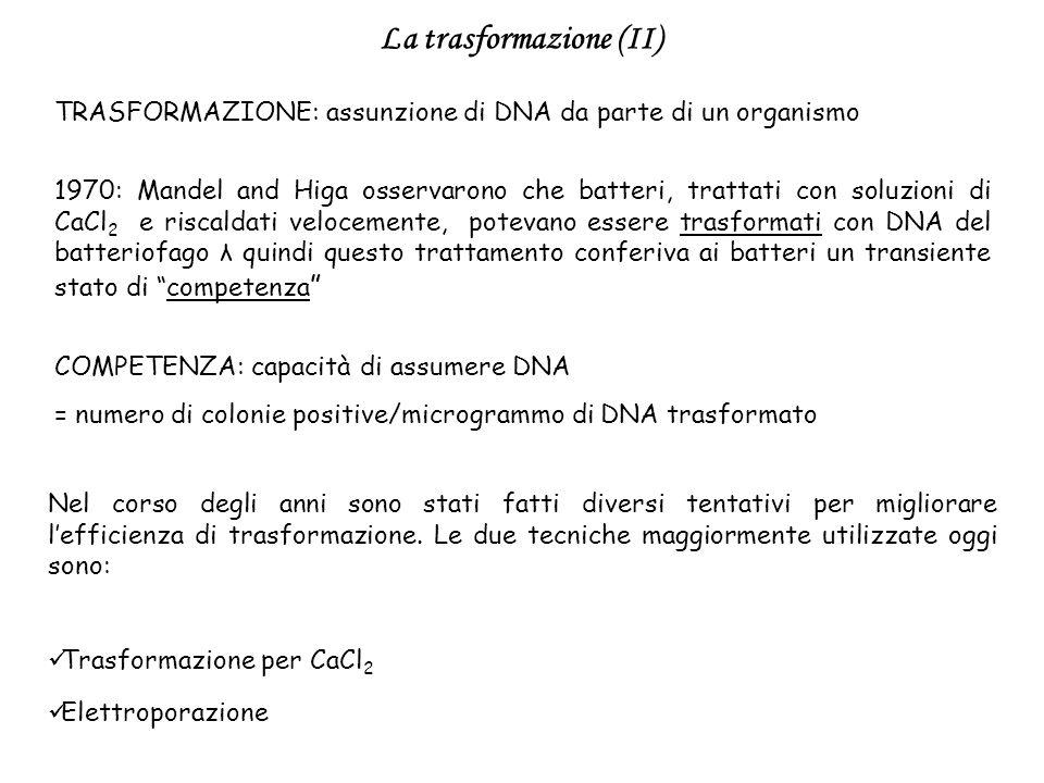 TRASFORMAZIONE: assunzione di DNA da parte di un organismo COMPETENZA: capacità di assumere DNA = numero di colonie positive/microgrammo di DNA trasfo
