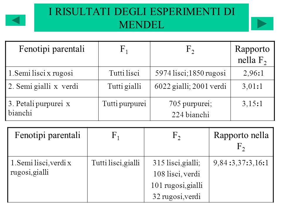 I RISULTATI DEGLI ESPERIMENTI DI MENDEL Fenotipi parentaliF1F1 F2F2 Rapporto nella F 2 1.Semi lisci x rugosiTutti lisci5974 lisci;1850 rugosi 2,96:1 2
