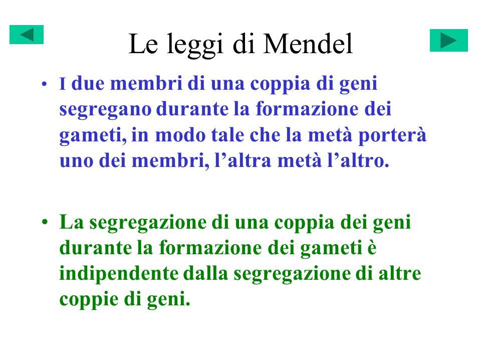 Le leggi di Mendel I due membri di una coppia di geni segregano durante la formazione dei gameti, in modo tale che la metà porterà uno dei membri, lal
