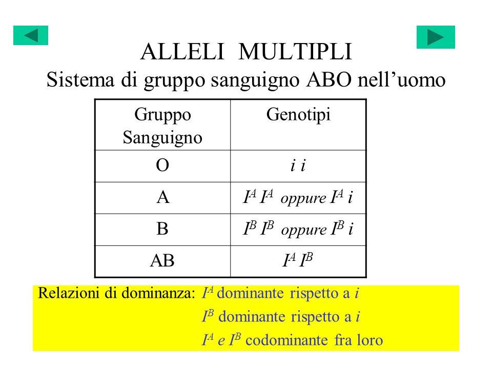 ALLELI MULTIPLI Sistema di gruppo sanguigno ABO nelluomo Gruppo Sanguigno Genotipi Oi AI A I A oppure I A i BI B I B oppure I B i ABI A I B Relazioni
