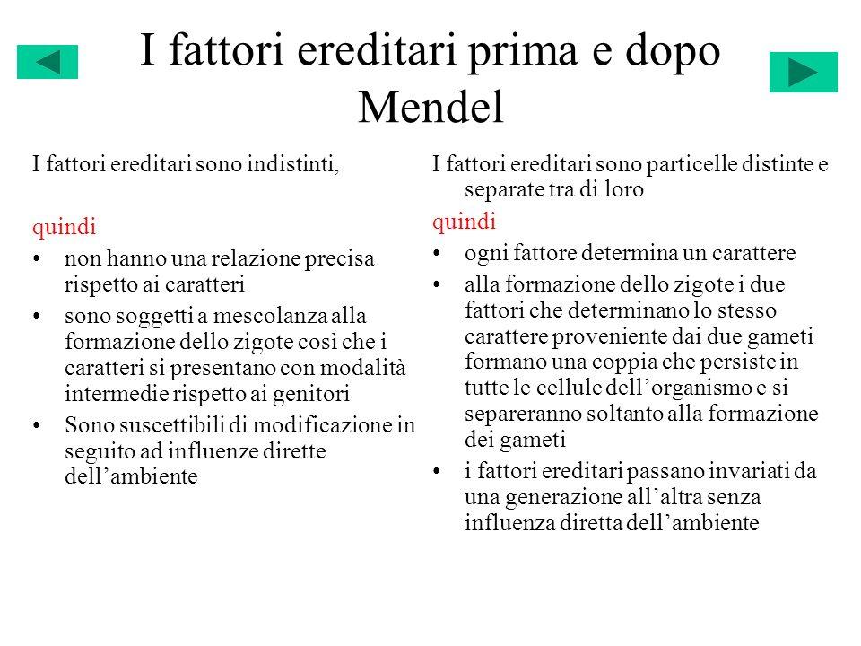 I fattori ereditari prima e dopo Mendel I fattori ereditari sono indistinti, quindi non hanno una relazione precisa rispetto ai caratteri sono soggett