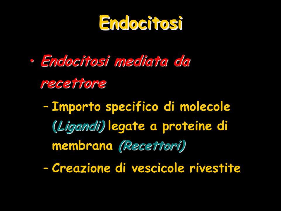 Endocitosi Endocitosi mediata da recettoreEndocitosi mediata da recettore (Ligandi) (Recettori) –Importo specifico di molecole (Ligandi) legate a prot