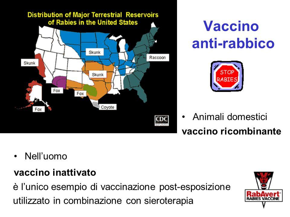 Vaccino anti-rabbico Nelluomo vaccino inattivato è lunico esempio di vaccinazione post-esposizione utilizzato in combinazione con sieroterapia Animali