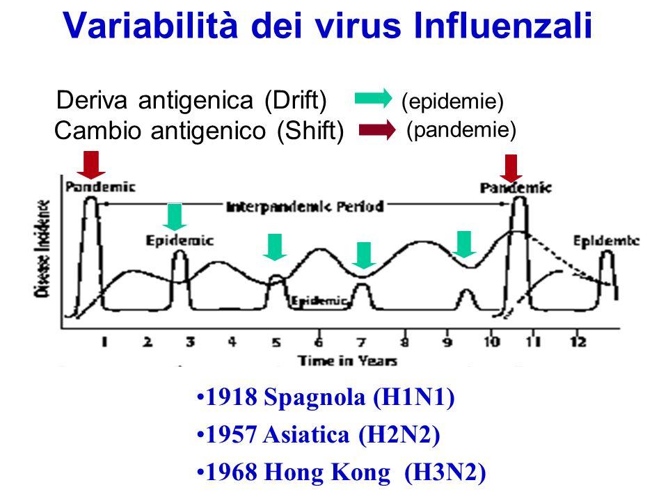 Variabilità dei virus Influenzali Cambio antigenico (Shift) (pandemie) Deriva antigenica (Drift) (epidemie) 1918 Spagnola (H1N1) 1957 Asiatica (H2N2)