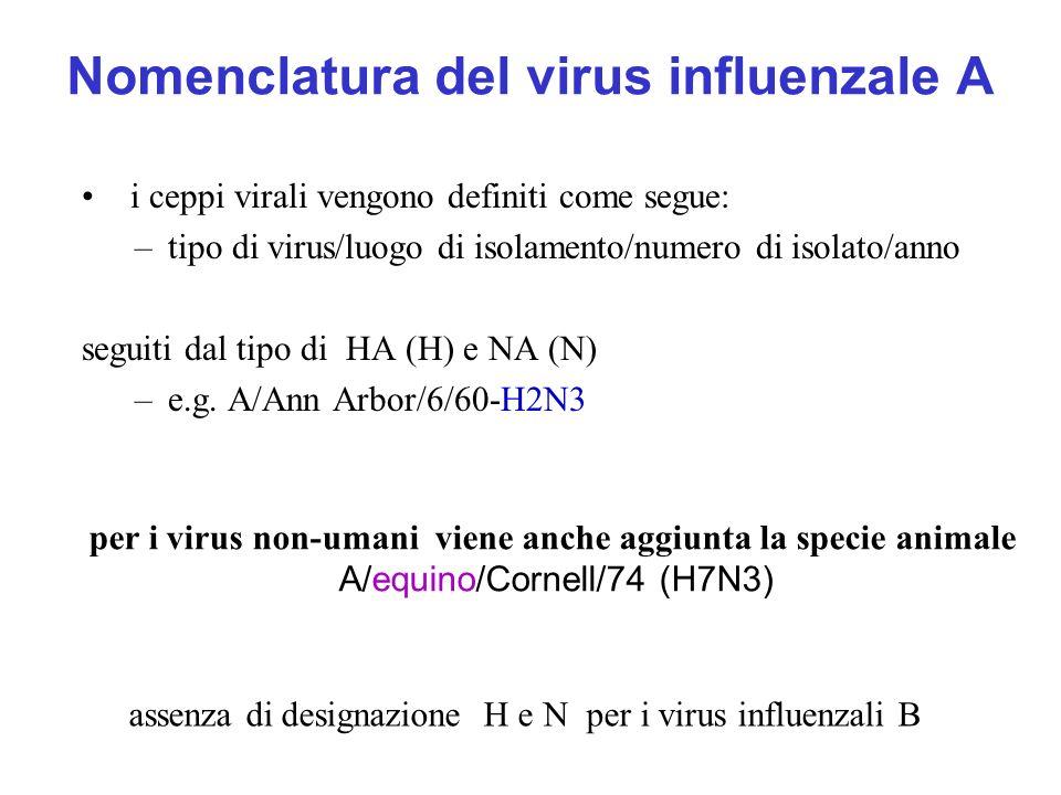 Nomenclatura del virus influenzale A i ceppi virali vengono definiti come segue: –tipo di virus/luogo di isolamento/numero di isolato/anno seguiti dal