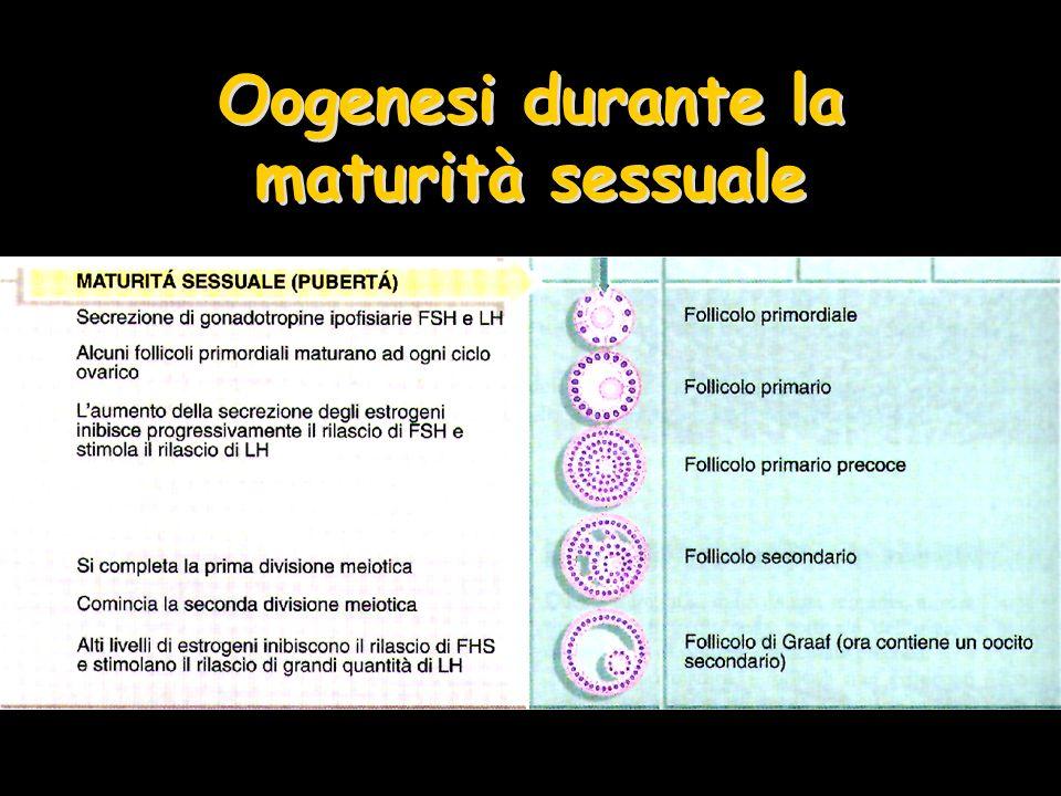 Oogenesi durante la maturità sessuale
