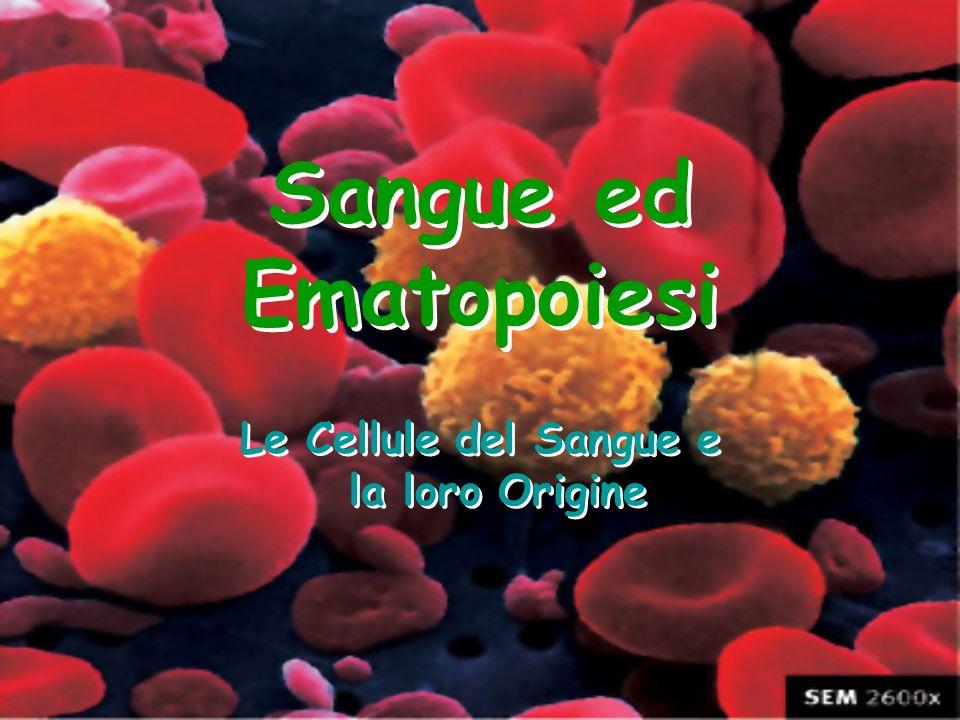 Sangue ed Ematopoiesi Le Cellule del Sangue e la loro Origine