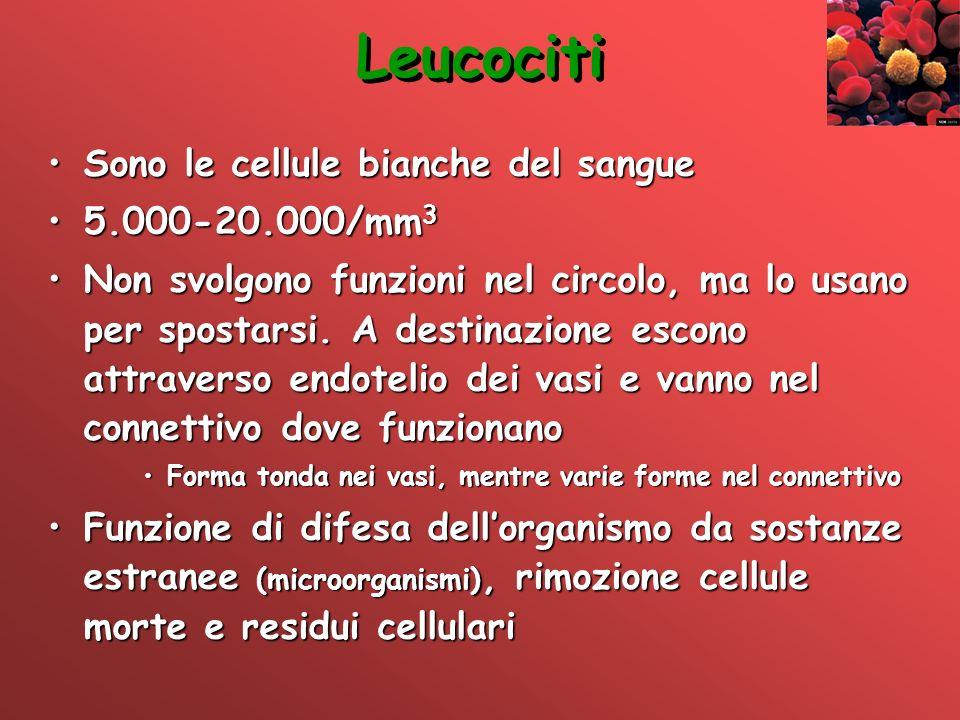 Leucociti Sono le cellule bianche del sangueSono le cellule bianche del sangue 5.000-20.000/mm 35.000-20.000/mm 3 Non svolgono funzioni nel circolo, m