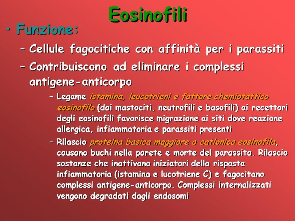 Eosinofili Funzione:Funzione: –Cellule fagocitiche con affinità per i parassiti –Contribuiscono ad eliminare i complessi antigene-anticorpo –Legame is
