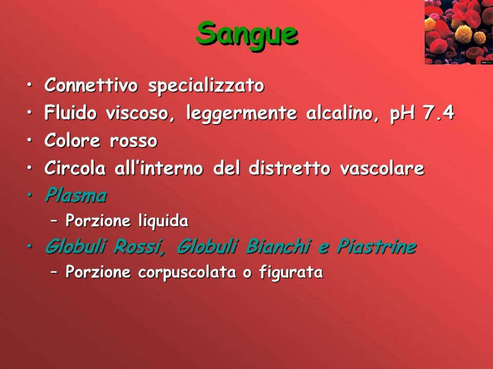 Sangue Connettivo specializzatoConnettivo specializzato Fluido viscoso, leggermente alcalino, pH 7.4Fluido viscoso, leggermente alcalino, pH 7.4 Color