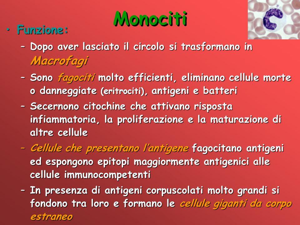 Monociti Funzione:Funzione: –Dopo aver lasciato il circolo si trasformano in Macrofagi –Sono fagociti molto efficienti, eliminano cellule morte o dann
