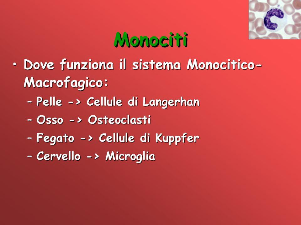 Monociti Dove funziona il sistema Monocitico- Macrofagico:Dove funziona il sistema Monocitico- Macrofagico: –Pelle -> Cellule di Langerhan –Osso -> Os