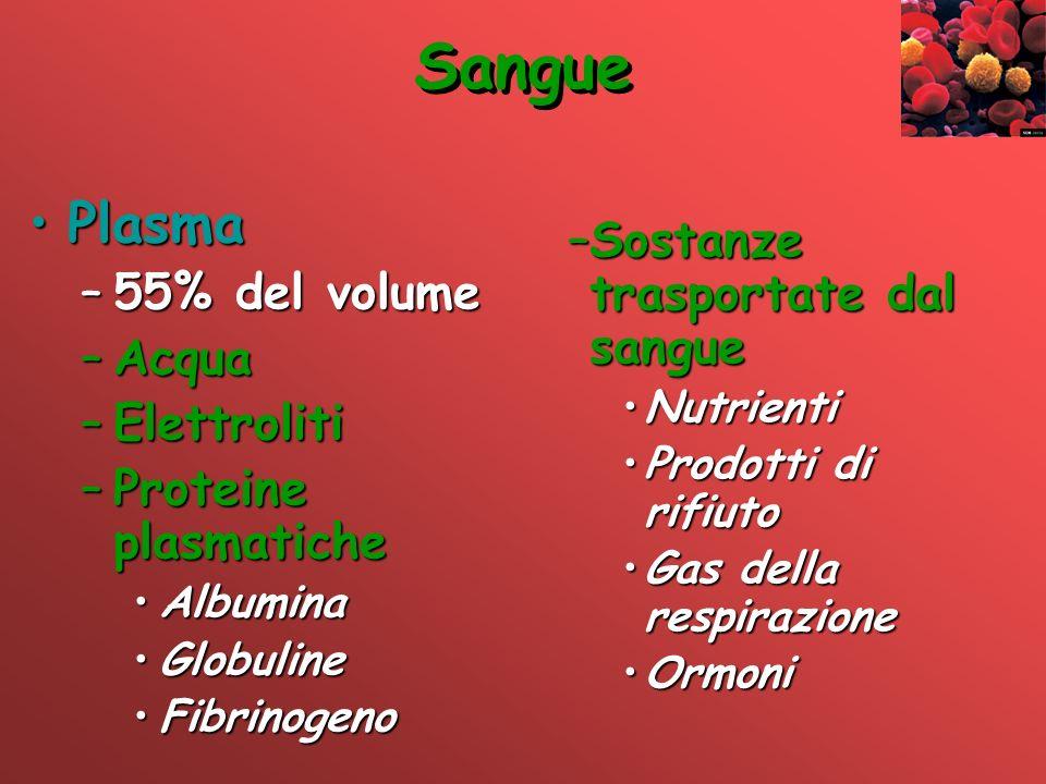 Sangue PlasmaPlasma –55% del volume –Acqua –Elettroliti –Proteine plasmatiche AlbuminaAlbumina GlobulineGlobuline FibrinogenoFibrinogeno –Sostanze tra