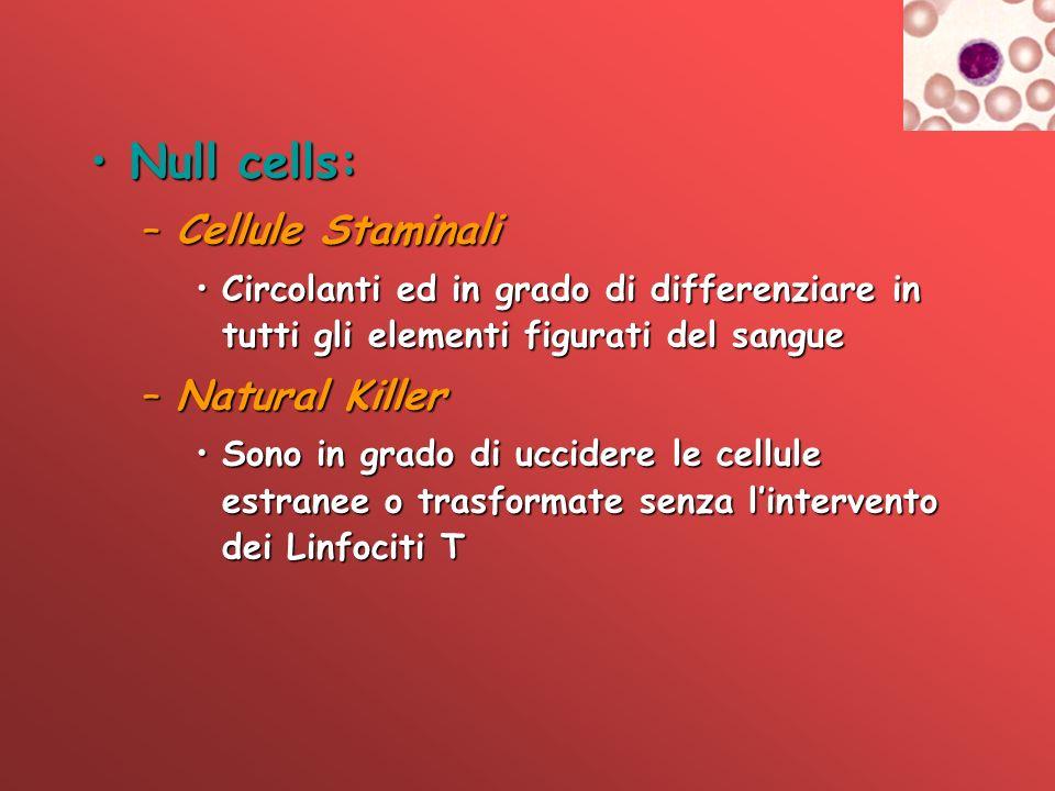Null cells:Null cells: –Cellule Staminali Circolanti ed in grado di differenziare in tutti gli elementi figurati del sangueCircolanti ed in grado di d