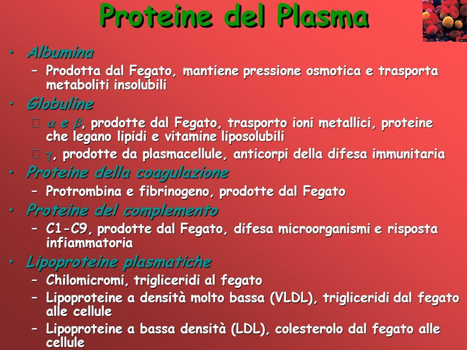 Proteine del Plasma AlbuminaAlbumina –Prodotta dal Fegato, mantiene pressione osmotica e trasporta metaboliti insolubili GlobulineGlobuline – e, prodo