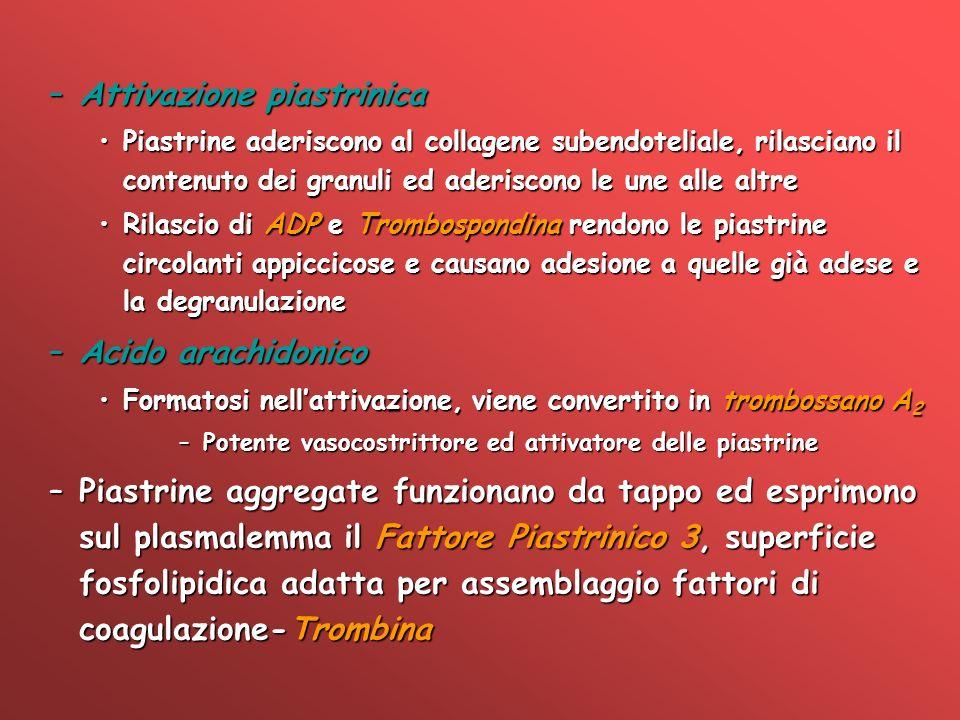 –Attivazione piastrinica Piastrine aderiscono al collagene subendoteliale, rilasciano il contenuto dei granuli ed aderiscono le une alle altrePiastrin