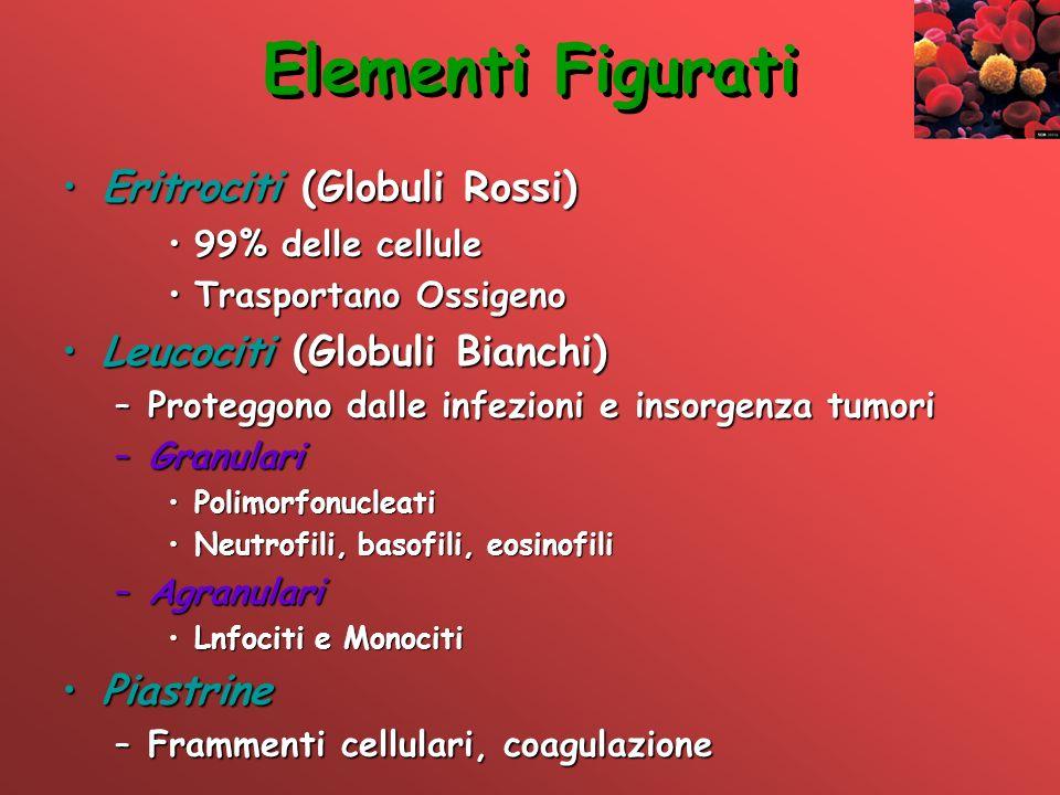 Elementi Figurati Eritrociti (Globuli Rossi)Eritrociti (Globuli Rossi) 99% delle cellule99% delle cellule Trasportano OssigenoTrasportano Ossigeno Leu