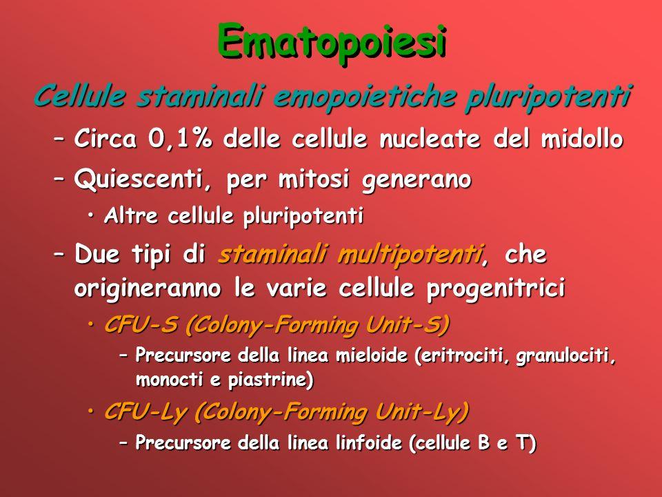 Ematopoiesi Cellule staminali emopoietiche pluripotenti –Circa 0,1% delle cellule nucleate del midollo –Quiescenti, per mitosi generano Altre cellule