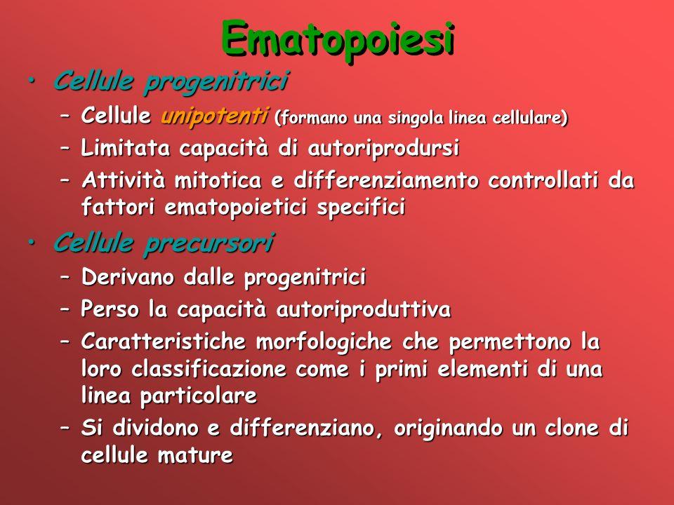 Ematopoiesi Cellule progenitriciCellule progenitrici –Cellule unipotenti (formano una singola linea cellulare) –Limitata capacità di autoriprodursi –A
