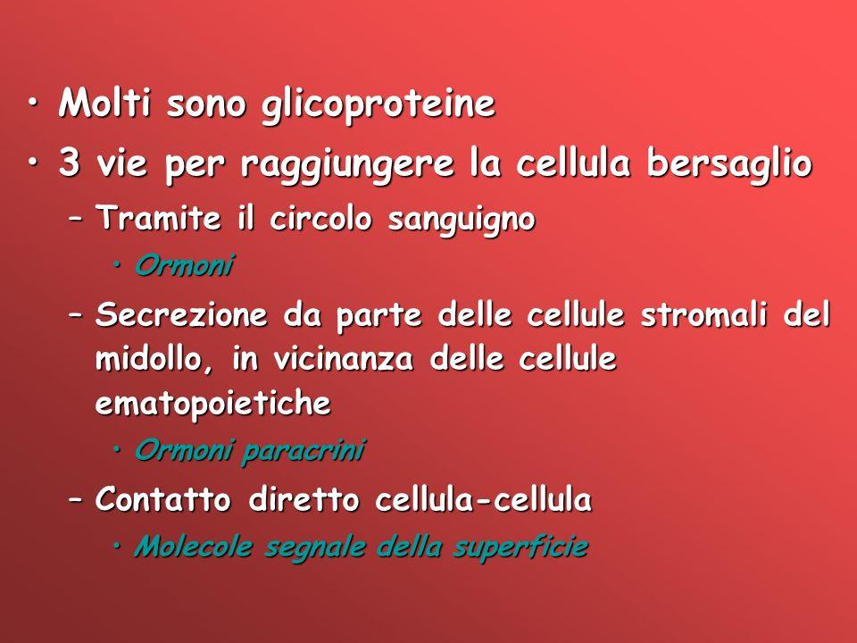Molti sono glicoproteineMolti sono glicoproteine 3 vie per raggiungere la cellula bersaglio3 vie per raggiungere la cellula bersaglio –Tramite il circ