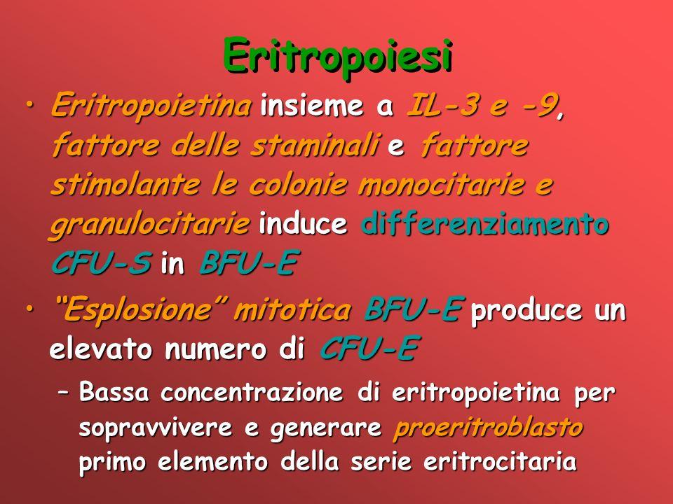 Eritropoiesi Eritropoietina insieme a IL-3 e -9, fattore delle staminali e fattore stimolante le colonie monocitarie e granulocitarie induce differenz