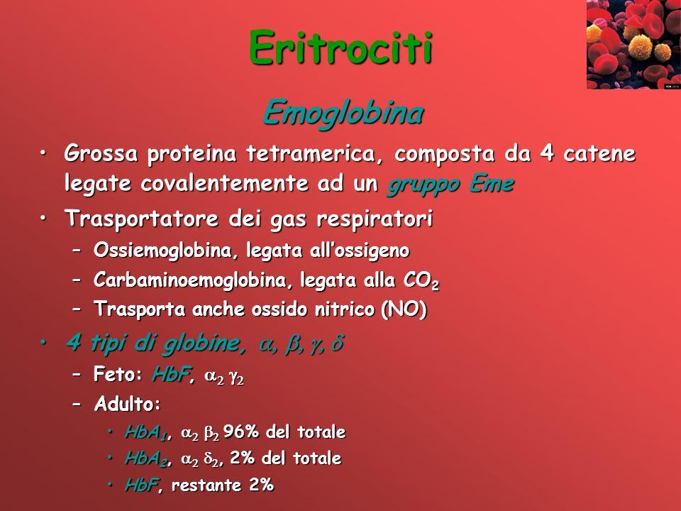 Eritrociti Emoglobina Grossa proteina tetramerica, composta da 4 catene legate covalentemente ad un gruppo EmeGrossa proteina tetramerica, composta da