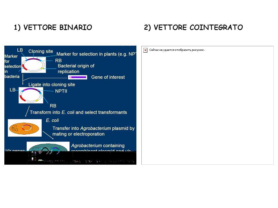 1) VETTORE BINARIO2) VETTORE COINTEGRATO