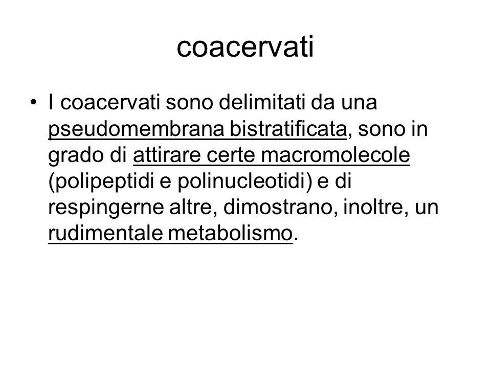 coacervati I coacervati sono delimitati da una pseudomembrana bistratificata, sono in grado di attirare certe macromolecole (polipeptidi e polinucleot