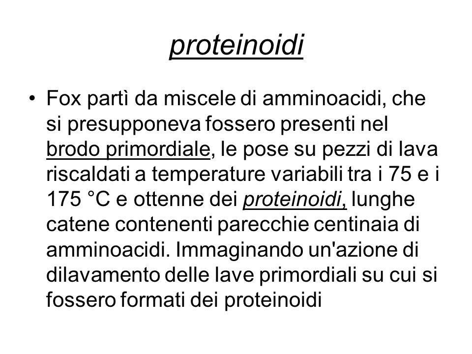 proteinoidi Fox partì da miscele di amminoacidi, che si presupponeva fossero presenti nel brodo primordiale, le pose su pezzi di lava riscaldati a tem