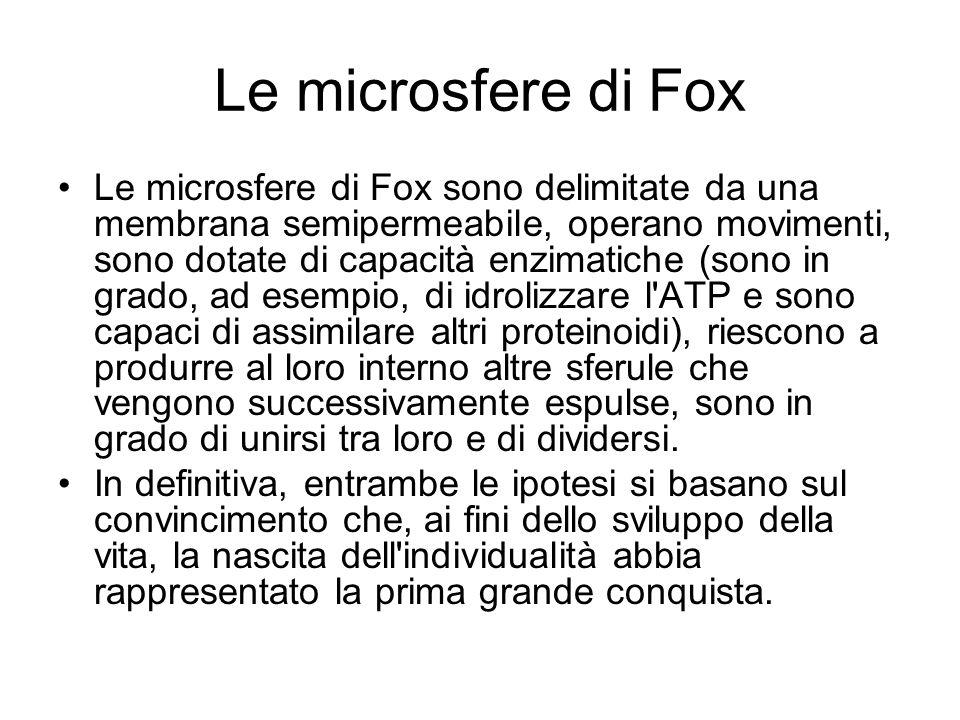 Le microsfere di Fox Le microsfere di Fox sono delimitate da una membrana semipermeabile, operano movimenti, sono dotate di capacità enzimatiche (sono