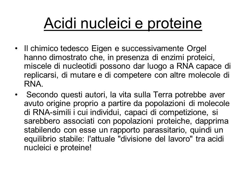 Acidi nucleici e proteine Il chimico tedesco Eigen e successivamente Orgel hanno dimostrato che, in presenza di enzimi proteici, miscele di nucleotidi