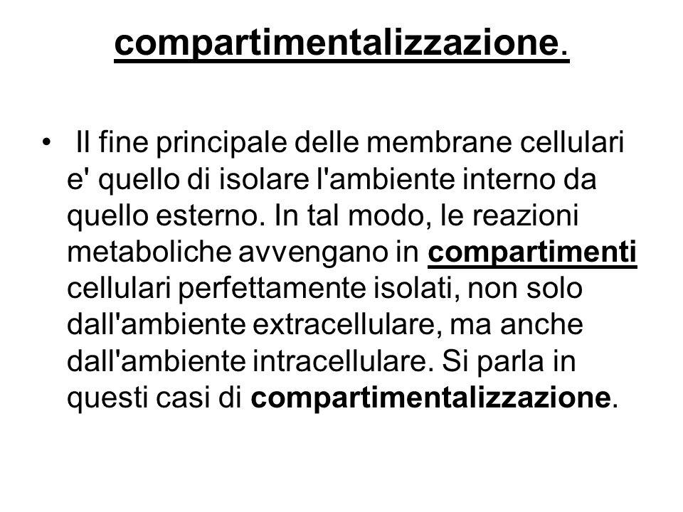 compartimentalizzazione. Il fine principale delle membrane cellulari e' quello di isolare l'ambiente interno da quello esterno. In tal modo, le reazio