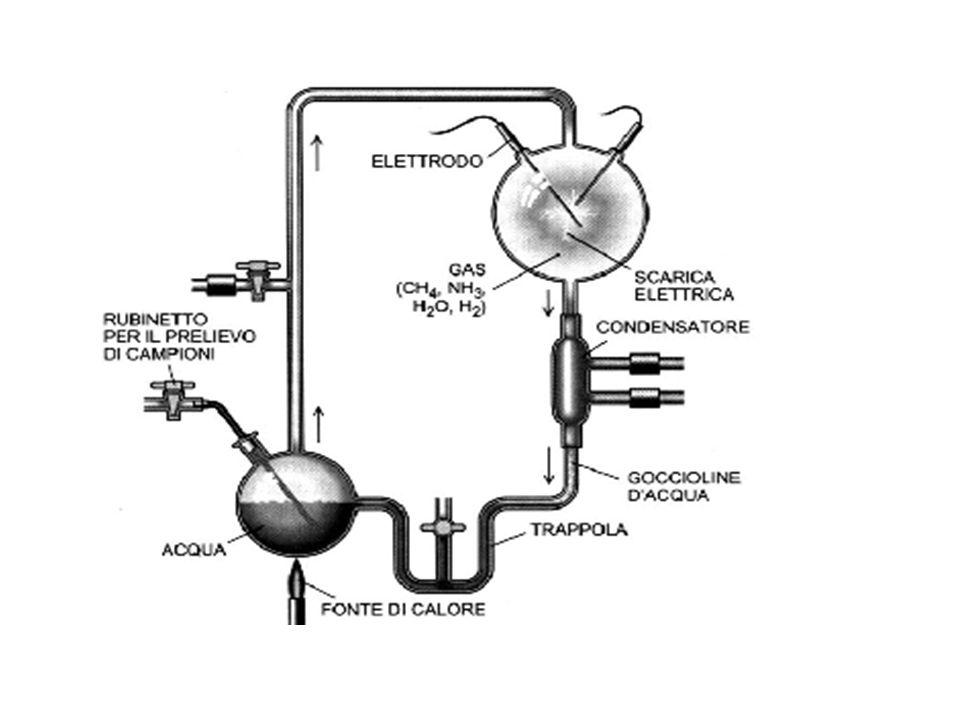 Lesperimento di Miller Miller si accorse che si erano formati numerosissimi composti organici, tra i quali amminoacidi.