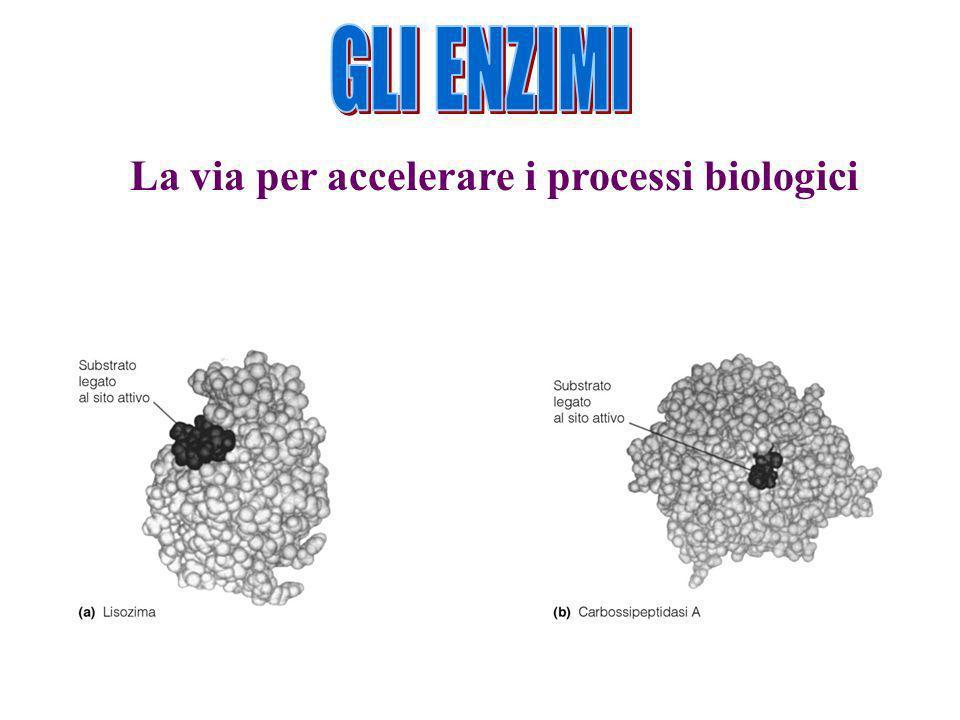 La via per accelerare i processi biologici