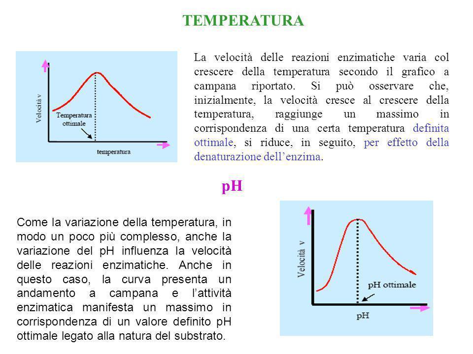 CONCENTRAZIONE DELLENZIMA La velocità iniziale v 0 di una reazione enzimatica è direttamente proporzionale alla concentrazione dellenzima. v0v0 5 Km è