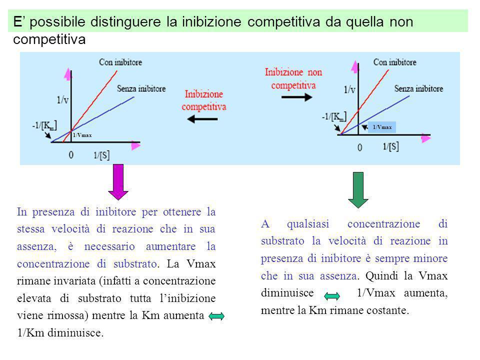 Linibizione reversibile può essere competitiva, quando gli inibitori sono, da un punto di vista chimico, molto simili alle molecole di substrato e si