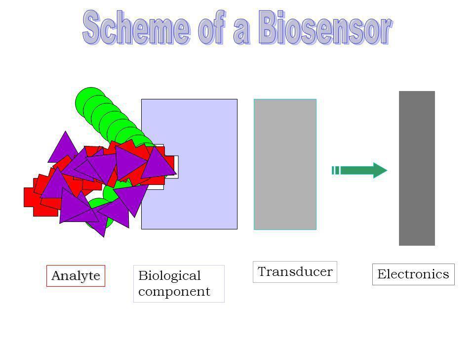 Biosensore Strumento analitico in cui è presente un elemento biologico strettamente connesso o integrato con un trasduttore di segnale. Il materiale b