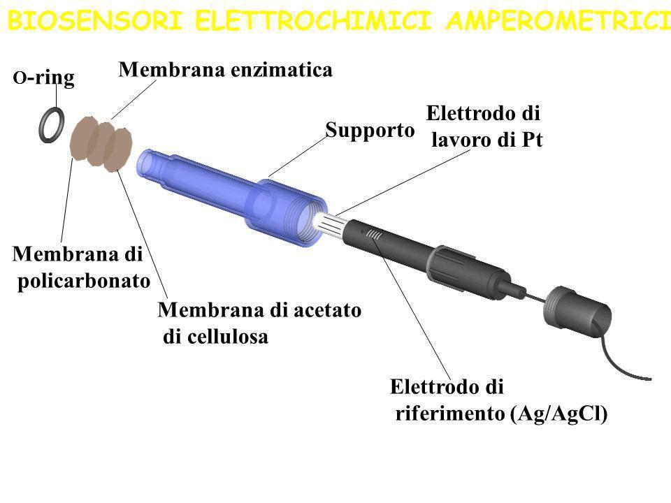 Sensore ad H 2 O 2 La stessa reazione catalizzata dalla glucosio ossidasi può essere utilizzata per la determinazione del glucosio monitorando la prod